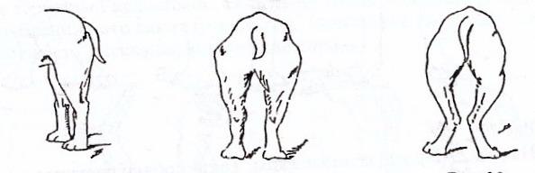 Бедра сильно развитые колени округлые хорошо сформированные скакательные суставы хорошо лечение суставов на урале